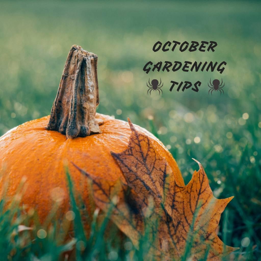 October Gardening Tips