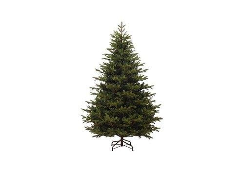 Christmas Mountain spruce - 240cm 8ft