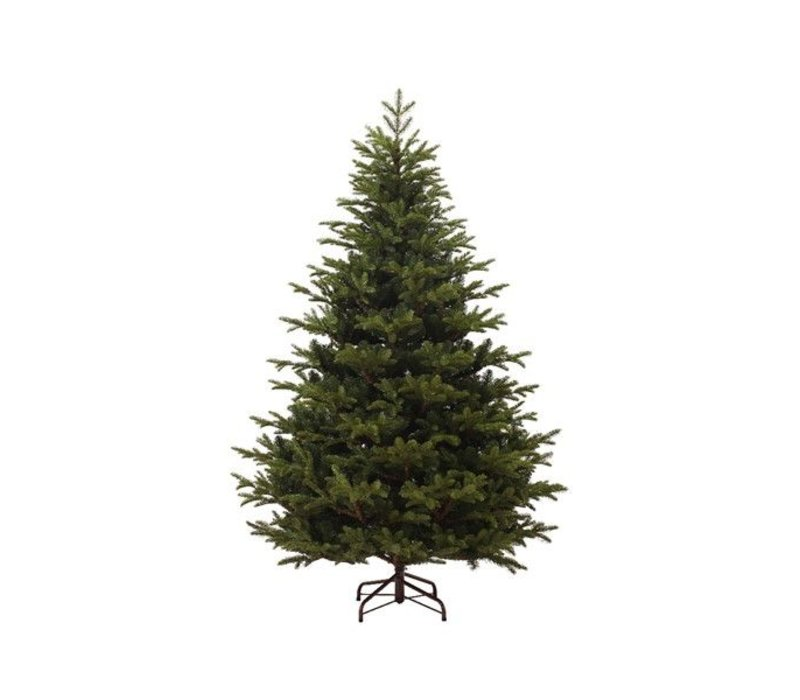 Mountain spruce - 240cm 8ft