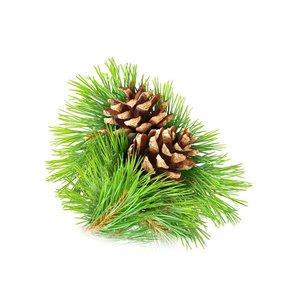 Pine air