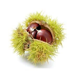 Chestnut infused basic