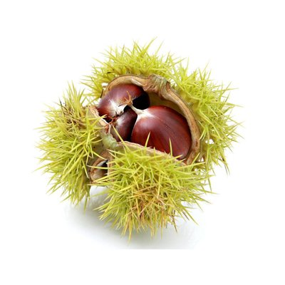 Chestnut infusion basic