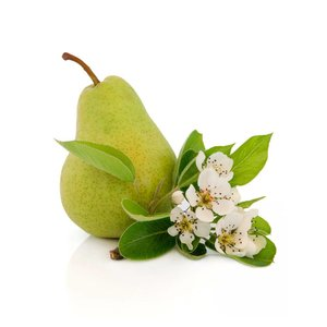 Pear blossom infusion basic