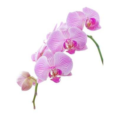Parfum d'orchidée