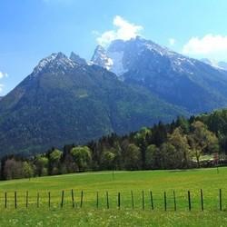 Alpine Kräuter