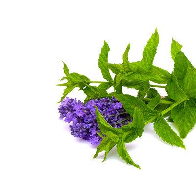 Lavendel Minze aufguss basis