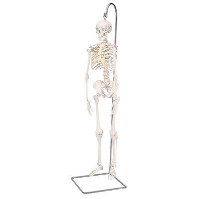 3B Mini-skelet Shorty