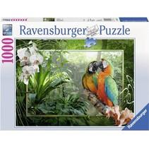 Papegaaien in de Jungle (1000)