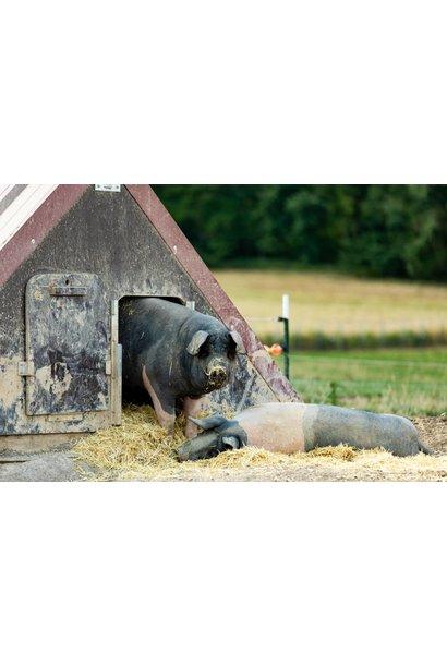 Schweinepaket klein