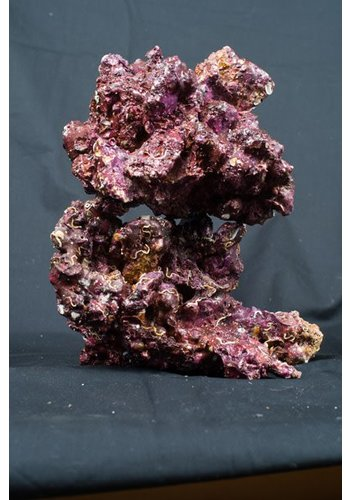 Real Reef Rock Medium/Large box 4th generation L