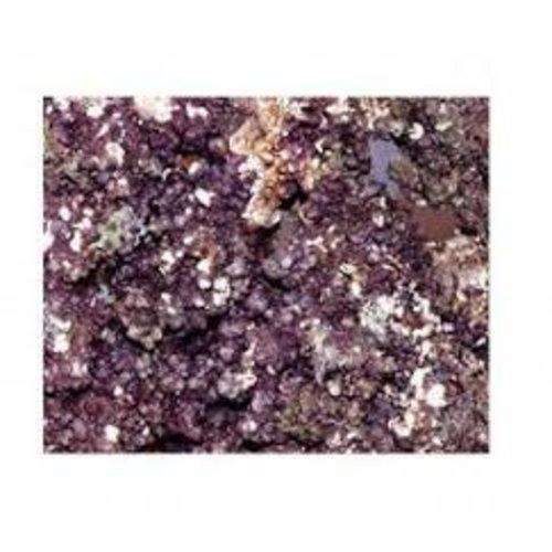1 kg levend steen Caribisch