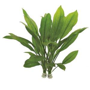 Echinodorus Bleheri (Amazone Zwaardplant)  Eco Bos