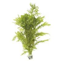 HYGROPHILA DIFFORMIS (VAANTJES PLANT) ECO BOS