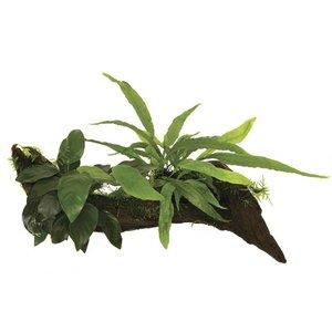 Wood Anubias - Microsorium - moss (Anubias, Javavaren, Javamos) Medium
