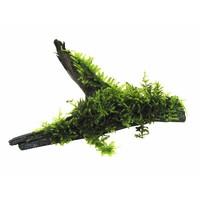 Wood Vesicularia Dubyana Size SSS