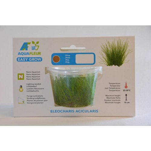 ELEOCHARIS ACICULARIS (NAALDGRAS) EASY GROW NR 2