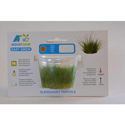 Eleocharis Parvula (Dwerg Naaldgras) Easy Grow Nr 3 Aquariumplant
