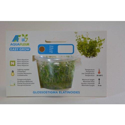 GLOSSOSTIGMA  ELANTIONIDES  (DWERGKRUID) EASY GROW NR 4
