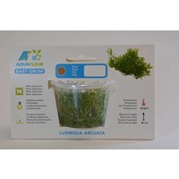 LUDWIGIA ARCUATA EASY GROW NR 6