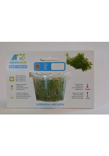 Ludwigia Arcuata Easy Grow nr 6