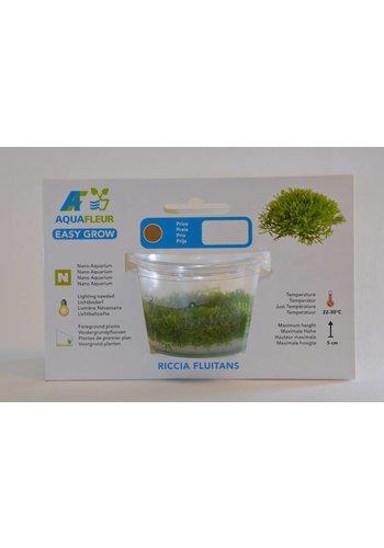Riccia Fluitans Easy Grow Nr 9