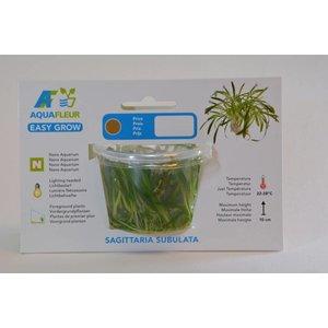 SAGITTARIA SUBULATA (PIJLKRUID) EASY GROW NR 11