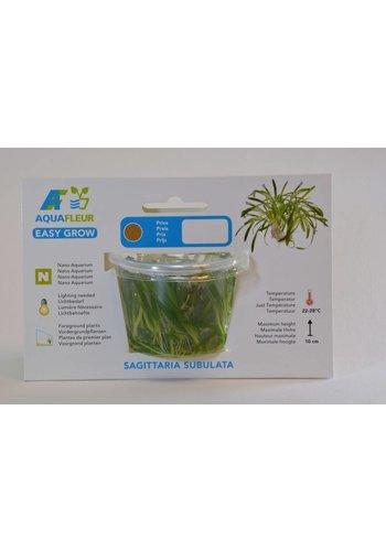 Sagittaria Subulata Easygrow Nr 11