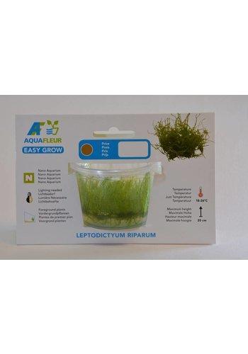 Leptodictyum Riparum (Stringy moss) Easy Grow Nr13