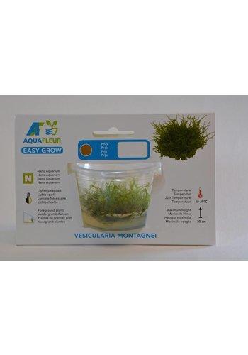 Vesicularia Montagnei (Christmas mos) Easy Grow Nr 14