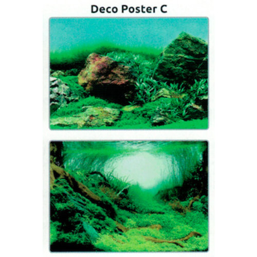 SuperFish SuperFish Deco poster C1 60x30 cm