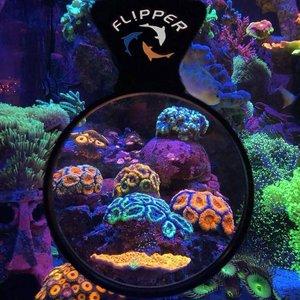 Flipper Flipper Deepsee viewer