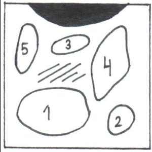 AQUARIUMPLANTEN PAKKET HOME  8