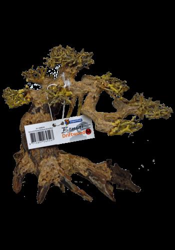 SuperFish Bonsai driftwood medium 24x16x20 cm