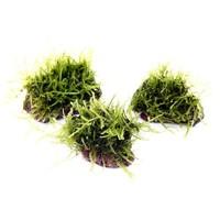 Moss on stone size S 3 stuks