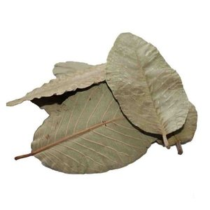 Ceramic Nature Ceramic Nature Guave leaves 15x