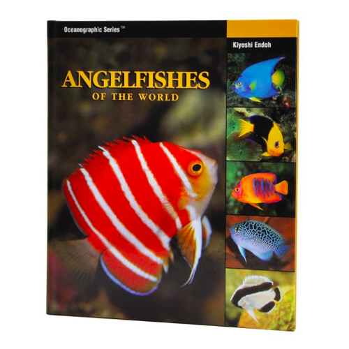 Two Little Fishies Angelfishes Of The World