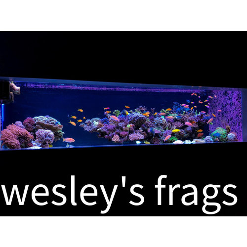 Wesley's frags