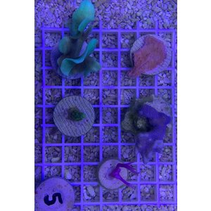 Koralen fragpack (WYSIWYG)