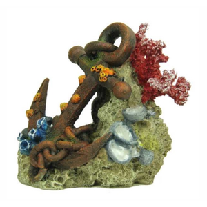 Blue Belle Pacific Blue Belle Pacific Coral with anchor 14 cm