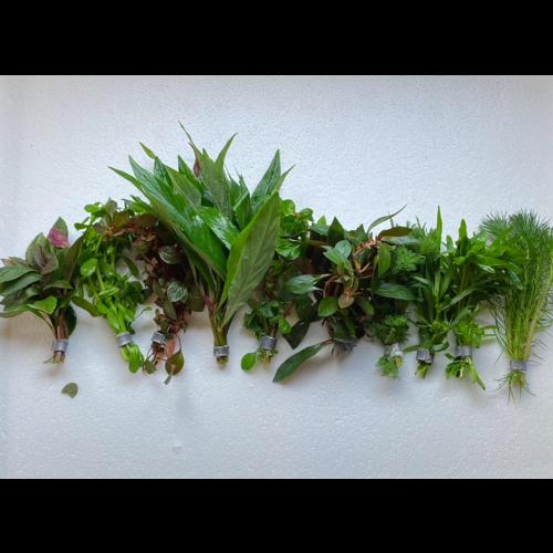 AC Eco bos planten set (3,50 per stuk) 10  voor 27,95