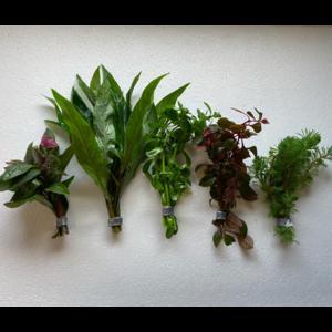 AC Eco bos planten set (3,50 per stuk) 5 voor 14,95