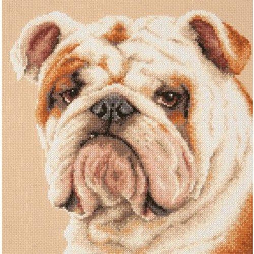 Chudo Igla Borduurpakket Bulldog - Chudo Igla