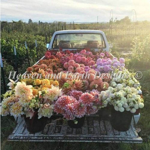 Heaven and Earth Designs  Michele Sayetta: Flower Truck