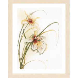 Lanarte Lanarte - Orchidee