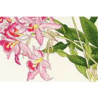 Borduurpakket Bothy Designs - Orchid Blooms - Bothy Threads