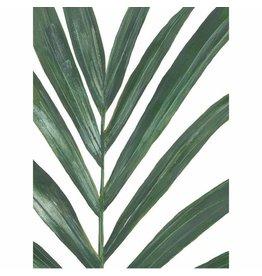 Vleijt Flora Poster Rhipsalis