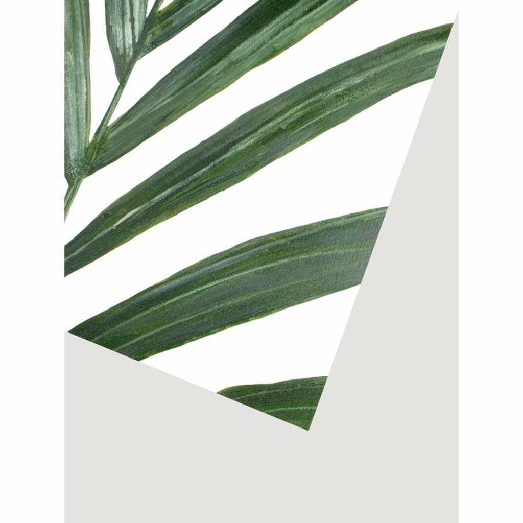 Pflanzenplakat Rhipsalis