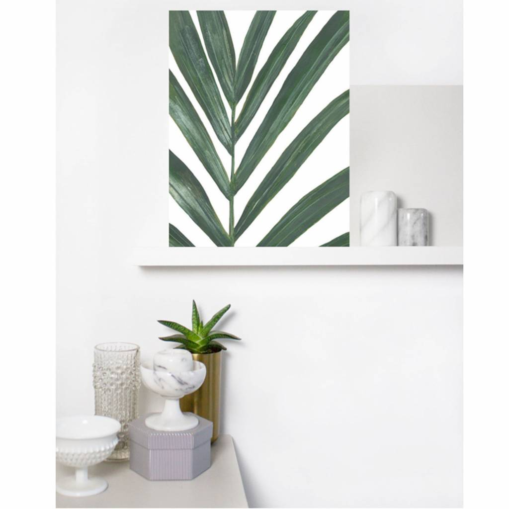Flora poster Rhipsalis