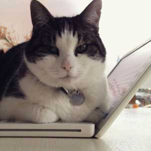Keecie cat with laptop