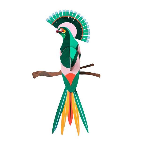 Paradiesvogel Gili